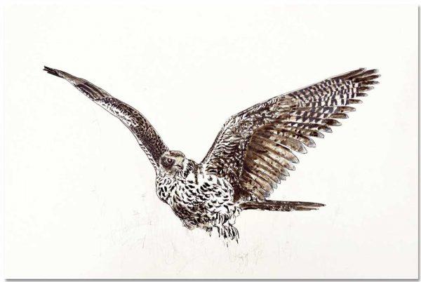 Tekening roofvogel giervalk op gerecycled papier