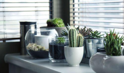 vensterbank-met-cactus-plantjes