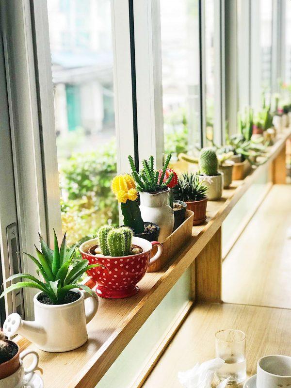 Vensterbank bankje met kleurrijke planten en potten